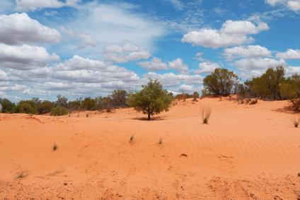 Light Warlpiri, so heißt die in der australischen Wüste neue entdeckteSprache